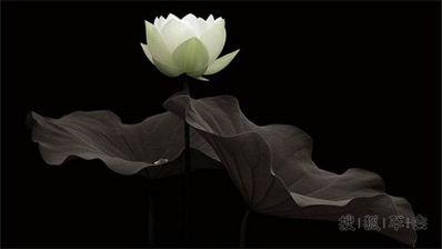 最有禅意的话 佛教中有禅意的诗句,话语?