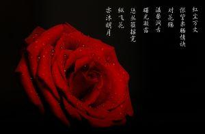 女人如玫瑰花的句子 描写女人似怒放玫瑰的一句话