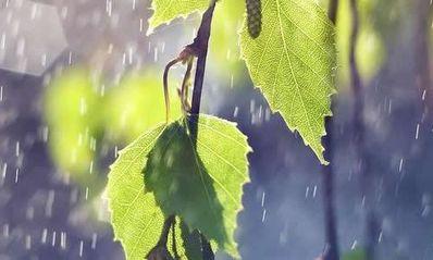 赞美夏雨的诗句 描写夏雨的诗句有哪些纯粹描写夏天下雨诗句