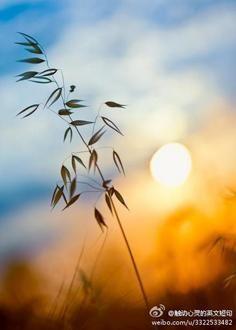 心灵纯净的唯美句子 表达心灵的句子