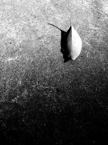 孤独落寞的古风短句 求一些关于孤独的句子,要古风的。