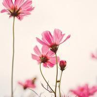 形容花绽放的唯美短句 求描写花的唯美句子。