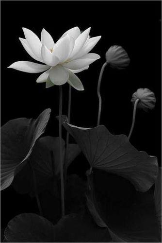 深奥的禅意佛语 找一些有禅意的佛语小故事